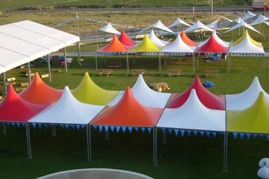 Festival Kamelyası